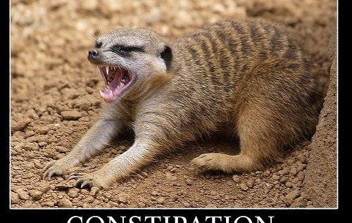 IAmNotADictionary Phrase Of The Day: Cerebral Constipation