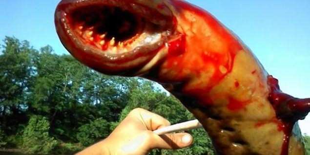 Alien Sea Lamprey Creature Pulled From New Jersey River