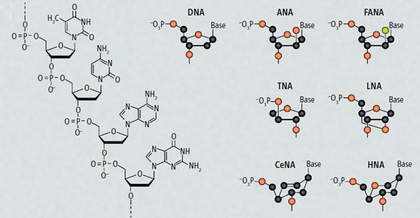 Synthetic XNA Molecules Can Evolve And Store Genetic Information, Just Like DNA