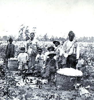 With No More Cotton To Pick, What Will America Do With 36 Million Black People?