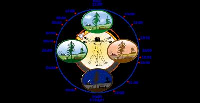 Body Clock 'Alters' Immune System